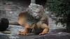 Malang Zoo 6 (MrCrisp) Tags: pdes malang java