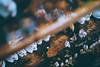 豪德寺|東京 Tokyo (里卡豆) Tags: bunkyōku tōkyōto 日本 jp minatoku olympus penf 25mm f12 pro olympus25 olympus25mmf12pro 關東 japan kanto 東京 東京都 東京市 豪德寺 雨天 setagayaku