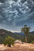 The Skies Are Angry || GROSE VALLEY || BLUE MOUNTAINS (rhyspope) Tags: australia aussie nsw new south wales grose valley blue mountains rhys pope rhyspope canon 5d mkii storm weather thunderstorm lightning mammatus clouds tree gum mountain nature fores woods view vista lookout vantage point rocks