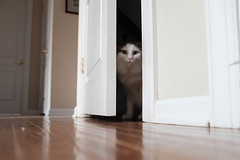 Mr. Awkward (Garen M.) Tags: fujifilmx100f jojo home chip chicklet cats buttercup ella