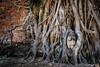 Wat Mahathat (Zoom In, Click On, Check Out) Tags: wat mahathat ayutthaya thailand buddha tree roots root ruin temple