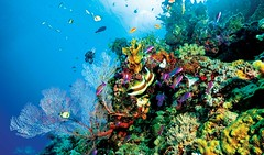 Great Barrier Reef Visit our site: http://www.theecotrip.com (theecotrip) Tags: travellife travells travellerslife travellerslifestyle tour destination beach touristattractions