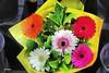 Flores para navidad    IMG_6857_qhdr (XimoPons : vistas 4.000.000 views) Tags: ximopons australia sydney oceania flores flowrs