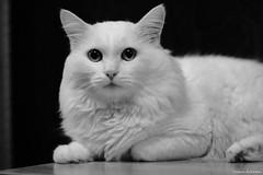 My cat (valery.eremeev) Tags: cat canon manual valeraeremeev lomo ломо 90mm po500 ро500 novosibirsk