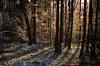 Winter 2017 (ChemiQ81) Tags: polska poland polen polish polsko zagłębie zaglebie dąbrowskie dabrowskie zima winter snow śnieg chmury clouds niebo sky chemiq d5100 nikon nikkor polonia pologne ポーランド بولندا полша poljska pollando poola puola πολωνία pholainn pólland lenkija polija польша пољска poľsko polanya lengyelországban lengyel lengyelország outdoor dobieszowice 2017 las forest road tree
