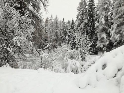 Val Pusteria, Sesto