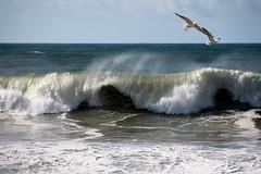 Fly away (Behappyaveiro) Tags: espinho aveiro portugal europa waves sea ocean seagulls europe beach roughsea crushingwaves atlanticocean