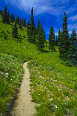 The Flowers and the Trees (RobertCross1 (off and on)) Tags: a7rii alpha cascaderange cascades crystalmountain emount fe1635mmf4zaoss ilce7rm2 mtrainier pacificnorthwest sony wa washington bluesky clouds evergreen flowers forest fullframe grass hiking landscape mirrorless mountains nature trail trees wildflowers pierce