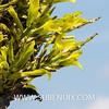 Puya chilensis-3 (SUBENUIX) Tags: bromeliaceae puyachilensis suculentas subenuix subenuixcom planta suculent suculenta botanic botanical