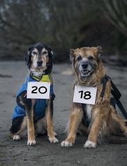 1/52 - New Year Mugshot (yookyland) Tags: 52weeksfordogs 2018 misty 152 happynewyear mugshots dogs beach morning