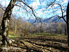 Italy: Pasturo (Valsassina; Lecco): view from the trail to church of San Calimero (1495 m) on Grigna mountain (mariofalcetti) Tags: italy italia lombardia pasturo albero paesaggio alberi montagne landscape mountains tree trees