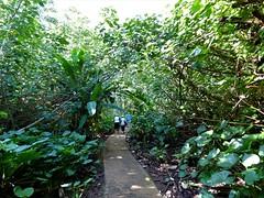 Wailua River State Park - Fern Grotto (27) (pensivelaw1) Tags: hawaii kauai wailuariverstatepark ferngrotto