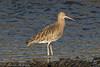 Curlew (Dougie Edmond) Tags: bird wader nature wildlife estuary pow burn