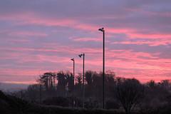 Pink Dawn (RandM1988) Tags: snaps rick