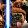 """I'ms da Last Jedi! Right, Mom?"" -PugsleyLuigi  #pug #dog #jedi #starwars #thelastjedi #ewok #r2d2 #lukeskywalker #darthvader #lightsaber #theforceawakens (TheZenOfPugsleyLuigi) Tags: theforceawakens pug dog jedi starwars thelastjedi ewok r2d2 lukeskywalker darthvader lightsaber"