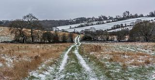 Snowy Tracks...