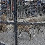 Visit to Sakkarbaug zoo Junagadh  (6)