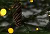 Christmas still-life (Ernst_P.) Tags: aut baum bokeh christbaum fichte inzing pflanze tirol weihnachten fichtenzapfen österreich tschurtsche zapfen samyang walimex 135mm f20