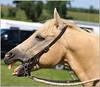 Paris Fair - Barrel Racing 39 (2.5 Million + views!!! Thank you!!!) Tags: canon eos 70d 70200mm ef70200f4l efex topaz psp2018 paintshoppro2018 paris ontario canada fair barrelracing sport action horses horse