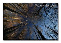 Vallon du Stang alar 2017  Tête en l'air ... (porte-plume) Tags: stangalard stangalar brest flickrunitedaward