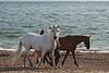 (orbit9000) Tags: ribbet beech horse haylingisland