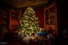 ⭐️ ⭐️ ⭐️ Christmas Glow ⭐️ ⭐️ ⭐️ (SonjaPetersonPh♡tography) Tags: christmaslights tree treelights longexposure christmas nikon nikond5300 2017 lights merrychristmas nightphotography hdr