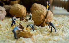 Muchas nueces, poco ruido (pedrojateruel) Tags: nueces obreros macro