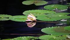 IMG_0120 (www.ilkkajukarainen.fi) Tags: kaisaniemenkasvitieeellinenpuutarha luomus helsinki visit happy life kasvi garden winter suomi suomi100 finland eu europa museumstuff