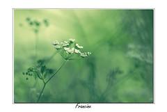 _IGP2236 copie (Francinen89) Tags: macro proxi nature fleurs flowers forêt forest