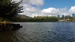 Wailua River State Park - Fern Grotto (45) (pensivelaw1) Tags: hawaii kauai wailuariverstatepark ferngrotto