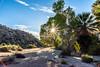 Colorado Desert Oasis (sellers8847) Tags: oasis desert outdoors nationalparks coloradodesert palmtrees california