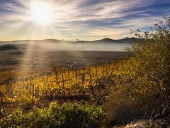 Luz (la_magia) Tags: cacabelos paisaje niebla sol luz atardecer naturaleza bierzo olt leon españa viñas montañas puesta de cielo