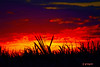 DSC_9514 ~ Sunset Over Sugarcane (stephanie.ovdiyenko) Tags: sunset colors sky sun silouettes landscapes