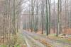 December2017 (raphael.dropsy) Tags: tervurenparkautumnnaturewalkingforestpeople tervuren brussels belgium