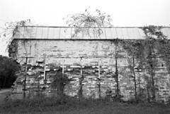 Opportunism (F. Neil S.) Tags: bricks eroded weeds chimney painted decay derelict abandoned millremnant blackandwhite blancetnoir 35mm film standdevelopment pyrocathd selfdev nikonf100 slr negative bwfp vines tinroof