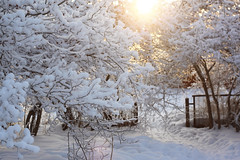 (decemberGirl.) Tags: winter snow sunlight branches 50mm