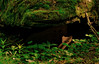 Wildkatzen_Weg_DSC_5948 (WeZiHeu44) Tags: wanderweg nationalpark thayatal hardegg wandern wildkatze suchspiel natur wald