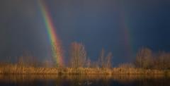 Pot of Gold (avdstelt) Tags: potofgold rainbow landscape nature biesbosch tree sun sunrise netherlands