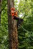 20170729-itcc--110140-3jpg_36296095035_o (ITCCAdmin) Tags: arboretum isa arboriculture arborist competition treeclimbing