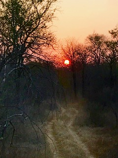 Zimbabwe Cape Buffalo Hunt 11