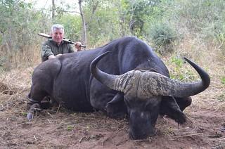 Zimbabwe Cape Buffalo Hunt 66