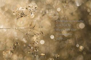 New Year... of light