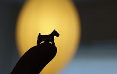 My favorite monopoly piece ..... (eric zijn fotoos) Tags: sonryrx10m3 holland noordholland nederland macromondays redux2017myfavoritethemeoftheyear silhouette fingertips memberschoicegamesgamepieces
