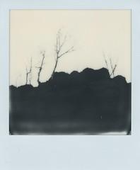 x (alex//b) Tags: 2017 polaroid polaroidoriginals sx70 instand film analog schwarzweis blackwhite coswig dresden sachsen saxony wald forest baum tree felsen rock