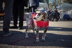 Bianca (N I C K ....1 8 2 8) Tags: dog cane occhiali sanbenedettodeltronto glasses nick 1828
