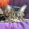 T'as de beaux yeux tu sais mon Haribo (INSTANT NATURE EVASION) Tags: animauxdomestiques félin