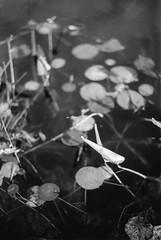 Poetic (earthquakefish) Tags: blackandwhite film nikonf80 canoscan9000fmarkii poetic minimilism