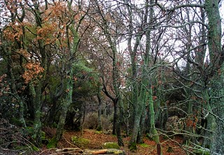 Footpath through the wild oaks