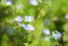 琦玉・権現堂堤 ∣ Gongendo・Saitama (Iyhon Chiu) Tags: 権現堂堤 琦玉県 gongendo saitama field grass japan 日本 琦玉 花 flower