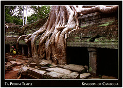 postcard - Ta Prohm, Cambodia 2 (Jassy-50) Tags: postcard angkor siemreap cambodia angkorarchaeologicalpark taprohmtemple tombraiderstemple temple ancient ruins khmer archaeology unescoworldheritagesite unescoworldheritage unesco worldheritagesite worldheritage whs treeroots tree roots